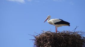 Stork on the nest over a column with blue sky at the town of Spain royalty free stock photo