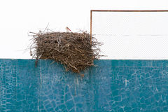 Stork nest over fronton wall Stock Photo