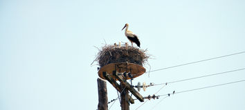 Stork in the nest Stock Images