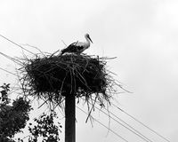 The stork is in a nest Royalty Free Stock Photo