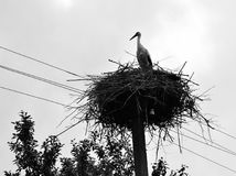 The stork is in a nest. Royalty Free Stock Photography