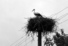 The stork is in a nest Royalty Free Stock Photography
