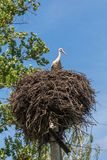 White stork in a nest on a pole. royalty free stock photography