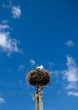 Stork nest on pylon. Royalty Free Stock Images