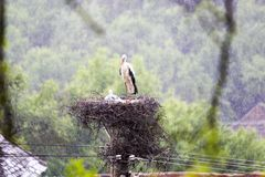 Stork nest in a raining day. View of a stork nest on a electricity pole in a raining day Royalty Free Stock Photos