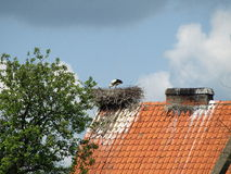 Stork nest Stock Image