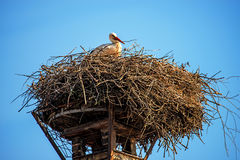 Stork in a nest on a roof Royalty Free Stock Photos