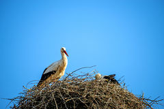 Stork in a nest on a roof Royalty Free Stock Image