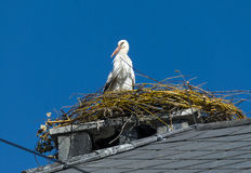 Stork on a nest Royalty Free Stock Photo