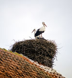 Stork in the nest on the roof Stock Photography