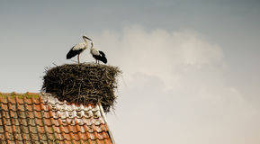 Stork in the nest on the roof Royalty Free Stock Photos
