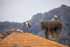 Stork Nest on the Roof Stock Photos