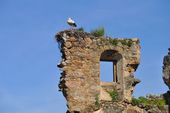 Stork in the nest. Stork nest on the ruins of a house Stock Images