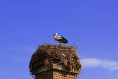 Stork in the nest Royalty Free Stock Photos