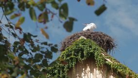 The stork in the nest stock footage
