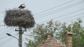 Stork Nest on Street Pillar stock video footage