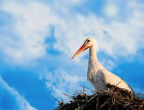 Stork in nest on a sunny day royalty free illustration
