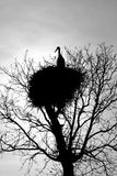 Stork Nest on top of a Backlight and White and Black Stock Image