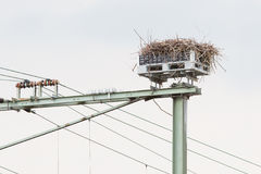 Stork nest on top of a railroad construction Stock Photos