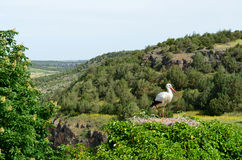 Stork in nest on top of tree. With mountain view Royalty Free Stock Images