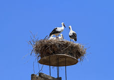 Stork nest Royalty Free Stock Images