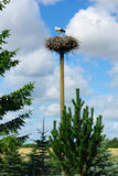 Stork in a nest. Two storks in the nest located on a high column Stock Image