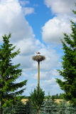 Stork in a nest. Two storks in the nest located on a high column Royalty Free Stock Photography