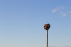 Stork in a nest with two young storks Royalty Free Stock Photo