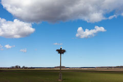 Stork in nest. Stock Photo