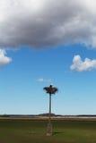 Stork in nest. Stock Image