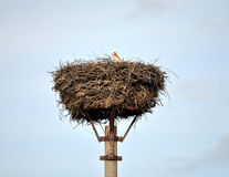 Stork in a nest. View of a stork in a nest Royalty Free Stock Photos