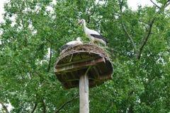 stork nest in the vondelpark of amsterdam stock photography