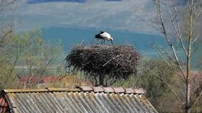 Stork on nest Stock Photography