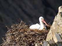 Stork nesting near the sea Stock Photography