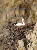 Stork nesting near the sea Royalty Free Stock Photo