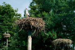 Stork nests with a single stork Stock Images