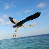 Stork on the ocean Royalty Free Stock Photos