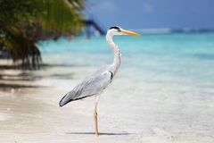 Stork on the ocean Royalty Free Stock Image