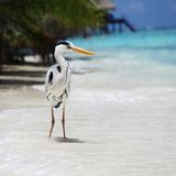 Stork on the ocean Stock Photography
