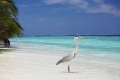 Stork on the ocean Royalty Free Stock Photos