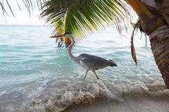 Stork on the ocean Royalty Free Stock Photography