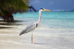 Stork on the ocean Stock Images