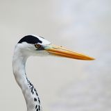 Stork on the ocean Royalty Free Stock Images
