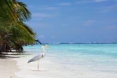 Stork on the ocean Stock Photo
