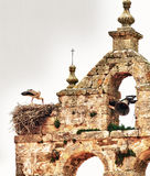 Stork over nest Royalty Free Stock Images