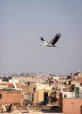Stork over the roofs of Marrakech. Stork flying over the roofs of Marrakech with many saellite dishes Royalty Free Stock Photography