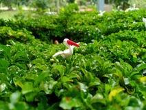 Stork på busken arkivbilder