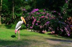 Stork på fält och blommabakgrund Fotografering för Bildbyråer