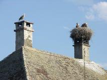 Stork på lampglaset, stork på taket Arkivfoto