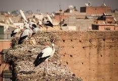 Stork på taken av Marrakech royaltyfri fotografi
